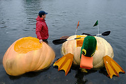 A man stands by carved-out giant pumpkins during the 14th annual West Coast Giant Pumpkin Regatta in Tualatin, Ore. on October 21, 2017. (Photo by Alex Milan Tracy)
