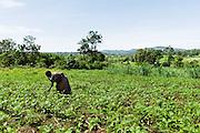 An African farmer walks in her garden in Lwala, a town in the North Kamagambo region of Kenya.