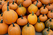 Pumpkins for sale at a farm shop on 20th September 2016 in North Yorkshire, United Kingdom