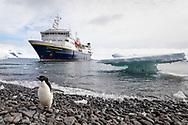Adele penguins on Paulet Island, Antarctica