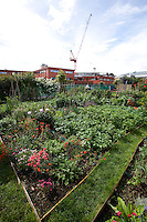 vegetable plots on an allotment in London east end