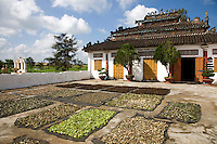 Vietnamese Herbalist Temple
