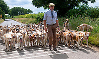 Bicester and Whaddon Chase hounds out for their daily walk stratton audlay oxfordshire.Photo by Brian Jordan