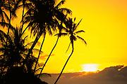 Sunset, Palm Tree, Hawaii<br />