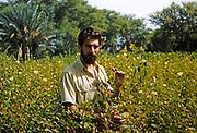 Western European agriculturalist in farm field inspecting cotton crop, Pakistan 1962