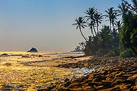 Coastline of the south coast of Sri Lanka at Ahangama, Southern Province.