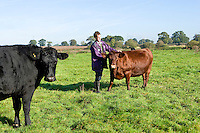 farmer with his herd of rare breed Redpoll cattle
