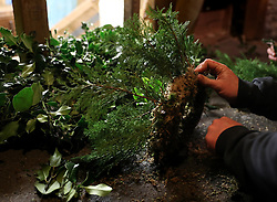 Moss rings being decorated to make Christmas wreaths at the Smiddy Farm Shop near Doune, Stirling.