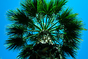 Palm tree with blue sky from below