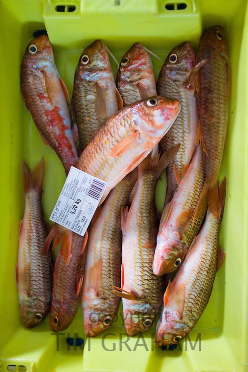 Freshly-caught fish at Confradia de Pescadores de Luarca, Confederation of Luarca Fishermen, at Puerto Luarca in Asturias, Spain