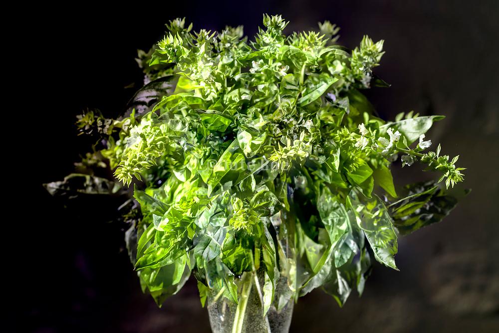 basil herb bouquet still life