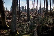 Fallen trees at the Taunus forest close to Oberursel. The Taunus is a mountain range in Hessen, Germany, located north of Frankfurt.