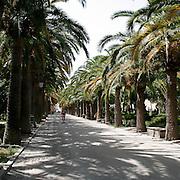 Il viale delle palme ai Giardini Iblei di Ragusa Ibla...The palms path of the Iblei gardens in Ragusa Ibla