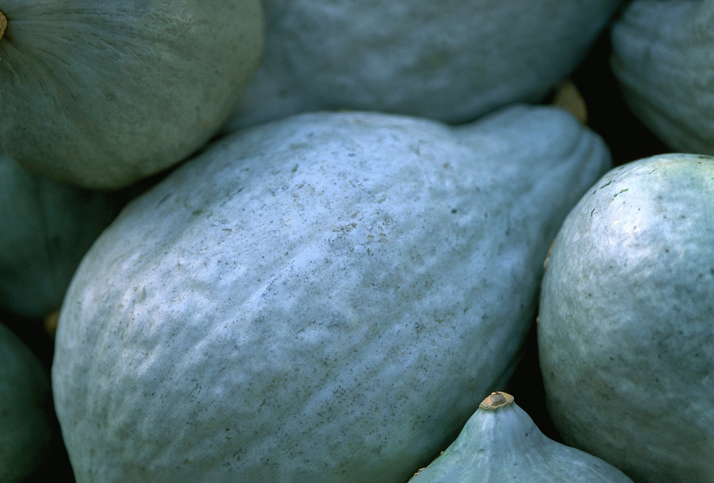 Close up selective focus photograph of some Hubbard Squash