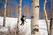 Backcountry skier Sarah Conlin catches turns through an open aspen grove in Uncompahgre National Forest, Colorado.