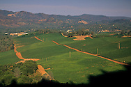Vineyards in the hills above Lower Lake, Clear Lake, Lake County, California