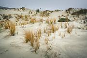 Scarce plantlife in dunes of Mason Bay, The Southern Circuit, Stewart Island / Rakiura, New Zealand Ⓒ Davis Ulands | davisulands.com