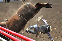 A bull rider is unceremoniously dumped just outside the chutes during Saturday's events at the 2014 California Rodeo Salinas.