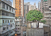 Wild Concrete<br /> <br /> Focusing solely on the phenomena of trees sprouting from residential buildings in Hong Kong, Wild Concrete compares the living conditions between plants and humans. Such peculiar sight of 'wild concrete' is by no means exclusive. They can be found everywhere in the heart of the city: roots spiralling down the external pipes of a Mong Kok loft; shoots lurking behind a window frame of an apartment in Central hills; or branches spreading across a residence in Sham Shui Po, collapsing it from the inside out.<br /> <br /> Given Hong Kong's favourable coastal geography and subtropical humid climate, plants require minimal nutrition to thrive even on concrete walls. Sufficient annual precipitation enables an organic layer to form on the surface of buildings, where rainwater and moisture can be collected and stored. The decaying paint and weathered walls serve as a moist growing ground on which microalgae, fungi, lichens and mosses may bud.<br /> <br /> On multiple levels, 'wild concrete' symbolises the spirit of the city and its people. While it appears a mismatch for organic roots to grow on concrete, Hong Kong people finding attachments to the floating city of investments feels no less intriguing. In the modern society, people's lives are literally cemented together like the entangled wood and concrete; yet they build walls against each other.<br /> <br /> The sense of human alienation and indifference is equally embodied by these clusters of trees standing aloof in midst of the foreign human settlements. On a more positive note, the saplings share the same exceptional qualities as their human counterparts: perseverance, diligence, and independence. Despite the harsh surroundings, both plants and humans strive for upward mobility and a better life with their high adaptability and flexibility.<br /> ©Romain Jacquet-Lagreze/Exclusivepix Media