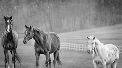 Three Horses Line Up For A Group Shot