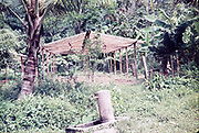 Tap in foreground water supply for greenhouse for bringing on  plants, farming in rural Trinidad  c 1962