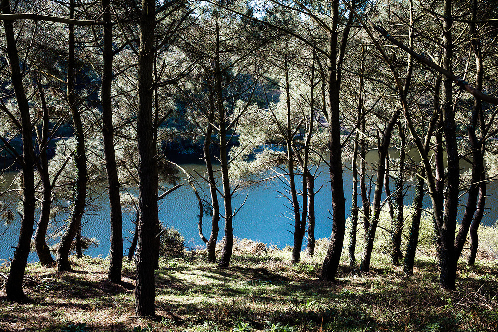 Woodland walks through the countryside and pine forest at Val de la mar Reservoir in Jersey, Channel Islands