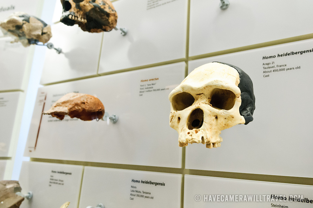 Exhibits at the Smithsonian Institution's National Natural History Museum in Washington DC.