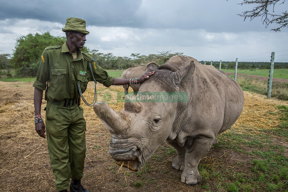 March 20, 2018 - Nanyuki, Kenya - Caretaker with northern white rhino female....With the death of Sudan, there are only two remaining northern white rhino alive. Called Najin and Fatu, they spend their lives living in protected area of Ol Pejeta Conservancy, where the 'Caretakers' sort of armed nature rangers are protecting them. (Credit Image: © Jan Husar/SOPA Images via ZUMA Wire)