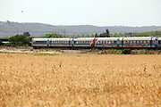 Israel, Valley of Elah, Train rushes through a ripe wheat field