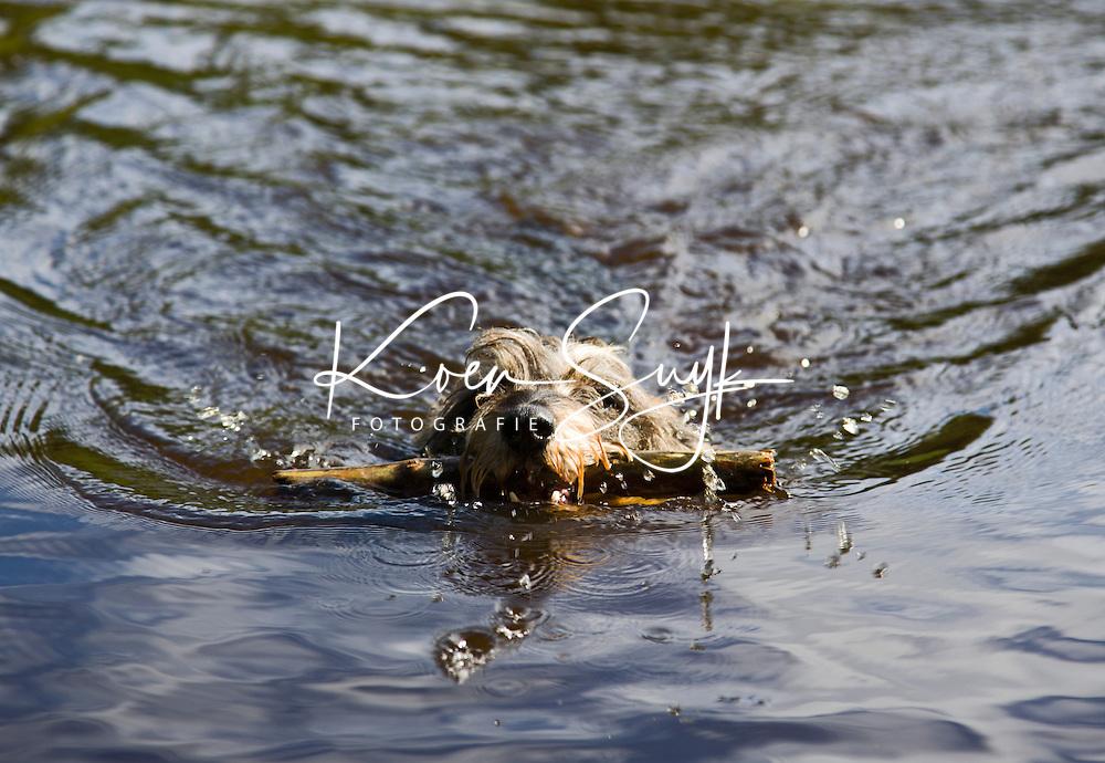 VLIELAND - Hond in het water met stok. ANP COPYRIGHT KOEN SUYK