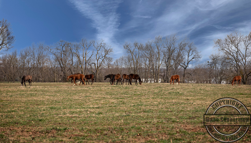 Traveling Fayette county on Wednesday April 3, 2019 in Lexington, KY. Photo by Mark Cornelison   UKphoto
