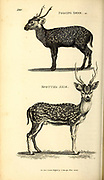 Deer from General zoology, or, Systematic natural history Vol II Part 2 Mammalia, by Shaw, George, 1751-1813; Stephens, James Francis, 1792-1853; Heath, Charles, 1785-1848, engraver; Griffith, Mrs., engraver; Chappelow. Copperplate Printed in London in 1801 by G. Kearsley