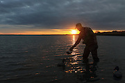 Placing Diver Decoys in Early Morning Light