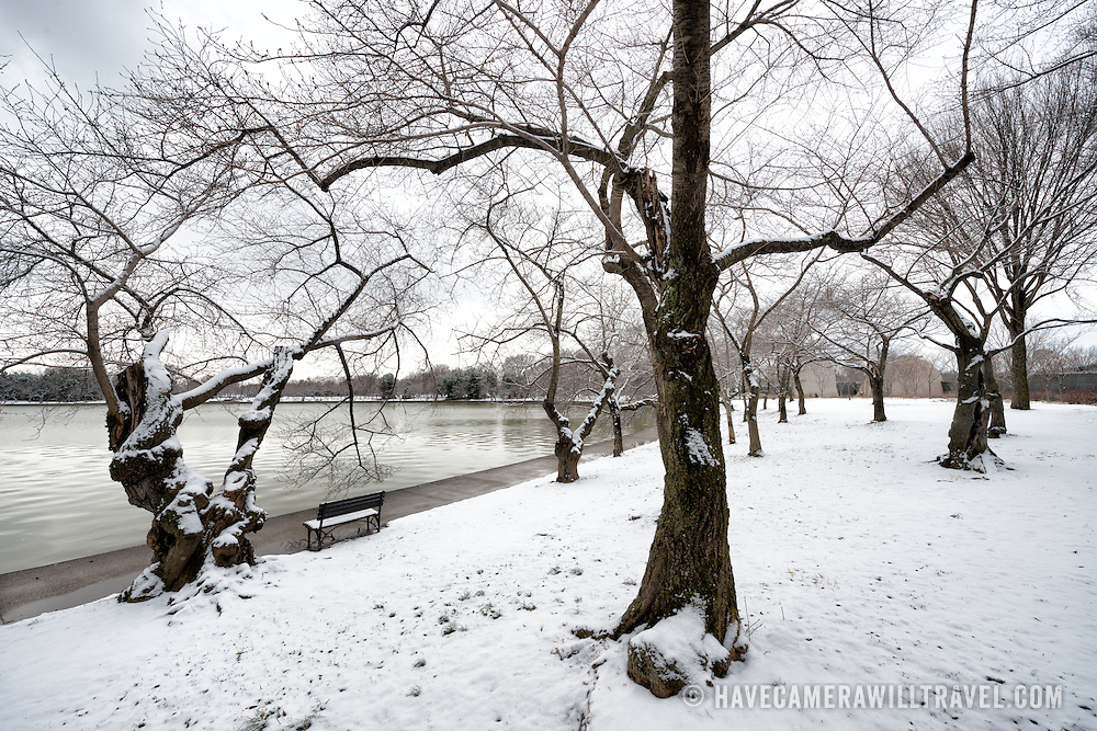 Recent snowfall leaves a blanket of snow on the ground and cherry trees lining the Tidal Basin in Washington DC.