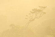 Through the fun-infused mist, the silhouette of a lone tree rises above the forest canopy in the Catlins, New Zealand.