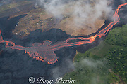 Aerial view of incandescent lava river draining from Fissure 8 of Kilauea Volcano east rift zone near the town of Pahoa. The river of lava flows downhill through agricultural lots in Kapoho, Puna District, Hawaii Island ( the Big Island ), Hawaiian Islands, U.S.A.; vegetation upwind of the river of lava remain alive and green while vegetation downwind of the river has been is dead and brown, killed by the toxic fumes released by the lava.