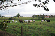 The land abutting the Surui territory is mainly cattle country, almost completey denuded of trees. The Frontier of the Surui territory is marked by a natural boundary, the beginning of a dense forest<br /><br />An Amazonian tribal chief Almir Narayamogo, leader of 1350 Surui Indians in Rondônia, near Cacaol, Brazil, with a $100,000 bounty on his head, is fighting for the survival of his people and their forest, and using the world's modern hi-tech tools; computers, smartphones, Google Earth and digital forestry surveillance. So far their fight has been very effective, leading to a most promising and novel result. In 2013, Almir Narayamogo, led his people to be the first and unique indigenous tribe in the world to manage their own REDD+ carbon project and sell carbon credits to the industrial world. By marketing the CO2 capacity of 250 000 hectares of their virgin forest, the forty year old Surui, has ensured the preservation, as well as a future of his community. <br /><br />In 2009, the four clans and 25 Surui villages voted in favour of a total moratorium on logging and the carbon credits project. <br /><br />They still face deforestation problems, such as illegal logging, and gold mining which causes pollution of their river systems
