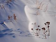 Drifted snow among vegetation along the Slims River, Kluane National Park, Yukon Territory, Canada