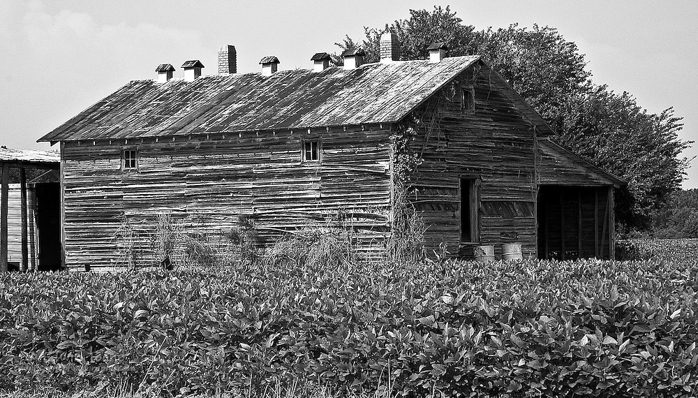 This is not a typical barn from the Southeast.  Normal tobacco barns have space for air to circulate and don't have all the small chimneys like this one.  This picture was taken on a back road between Goldsboro and Wilmington North Carolina.