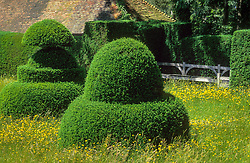 Yew topiary and buttercups (Ranunculus) in the meadow at Great Dixter. Lutyens bench seat.