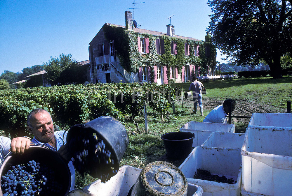 """Seasonal grape pickers harvesting Chateau Margaux's annual grape production during the yearly """"vendage"""", Bordeaux, France"""