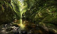 Knocksink Gorge, Enniskerry, Co.Wicklow, Ireland.
