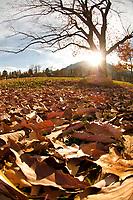 Autumn leaves cover the ground in Chautauqua Park, Boulder, Colorado.