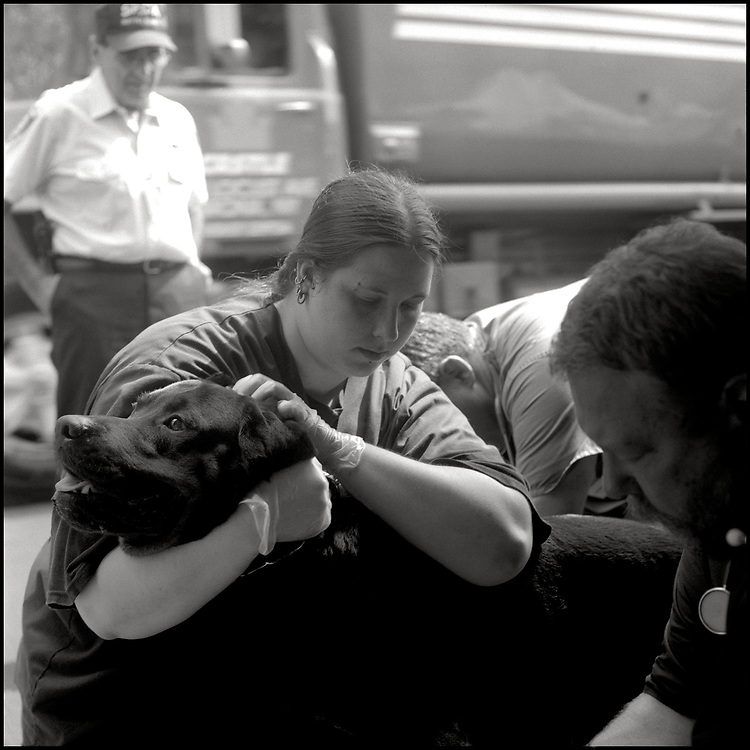 Veterinary Medical Assistance Teams (VMATs) were deployed for the first time, on September 11, 2001, by the federal government to maintain the health of service dogs canvassing for the missing. Bigfoot was one of the search and rescue dogs working at ground zero being treated by the VMAT team.