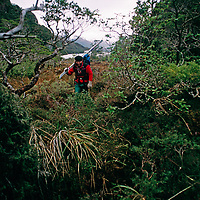 A ski mountaineer hikes through dense beech forest en route to Patagonian peaks.