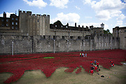 Tower of London. 888,246 ceramic remebrance poppies are being planted. One for each life lost in the First World War. The installation has been made by Created by ceramic artist Paul Cummins, with setting by stage designer Tom Piper, and thousands of volunteers.
