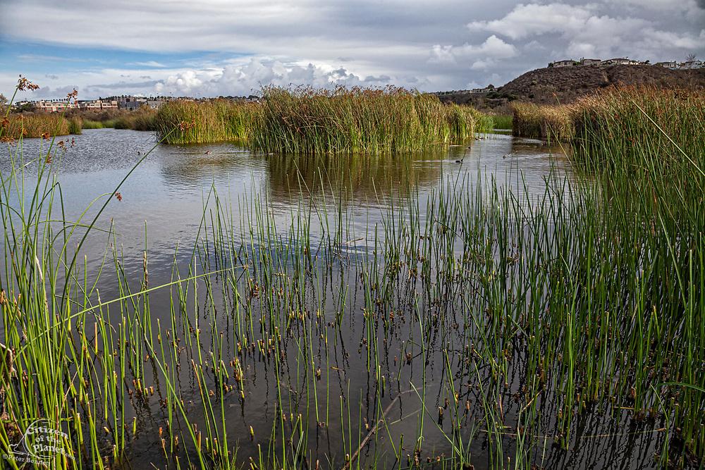 Ballona Wetlands, Playa Del Rey, Los Angeles, California, USA