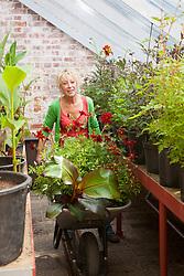Carol Klein taking a wheelbarrow full of dahlias out of the grrenhouse to the hot border