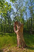 """Woody"" the Sculpture. Seine River Forest<br />Winnipeg<br />Manitoba<br />Canada"