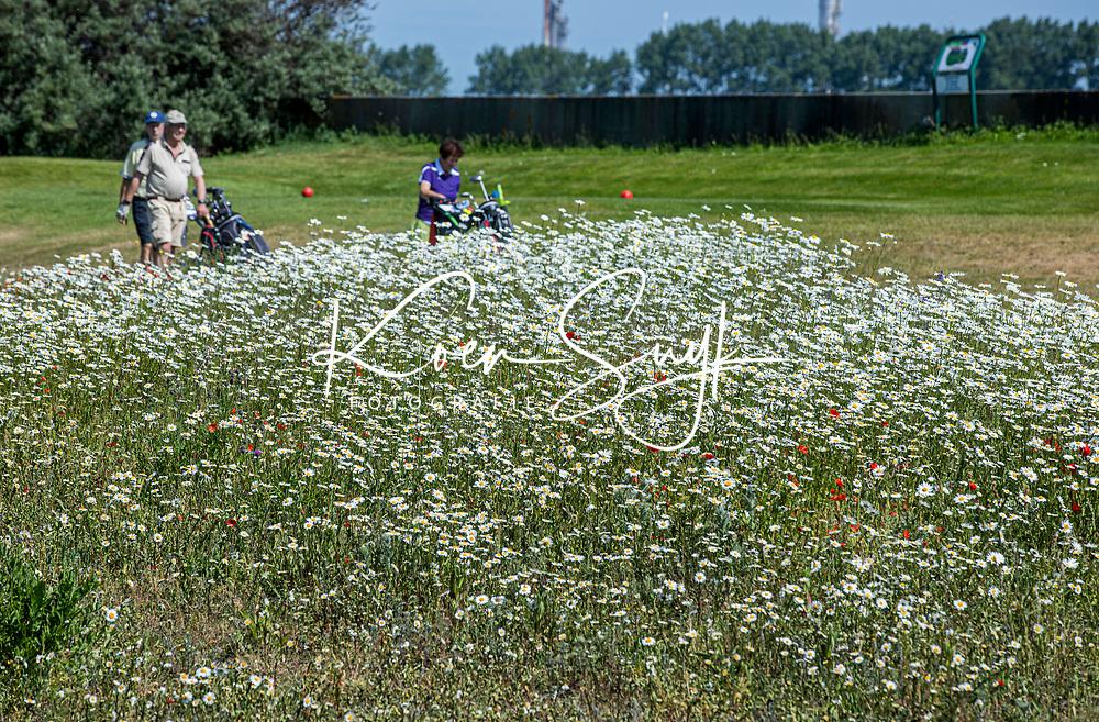 BRIELLE -  hole 10 met wilde bloemen,, Kleiburg , golfbaan.  COPYRIGHT KOEN SUYK